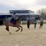 Entrainement des chevaux au parc équestre fédéral du Touquet